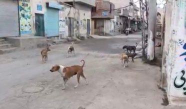دیپالپور،شہر میں آوارہ کتوں کی بھرمار،عوام شدید پریشان،انتظامیہ مدہوش